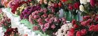Święto Róż Końskowola 19.07.2020